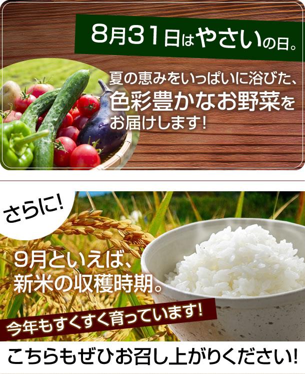 8/31はやさいの日、夏の恵みをいっぱいに浴びた、色彩豊かなお野菜をお届けします!