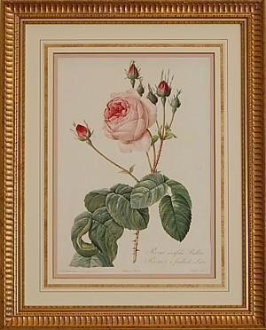 淡いピンクの古代バラ エレガント額装・大